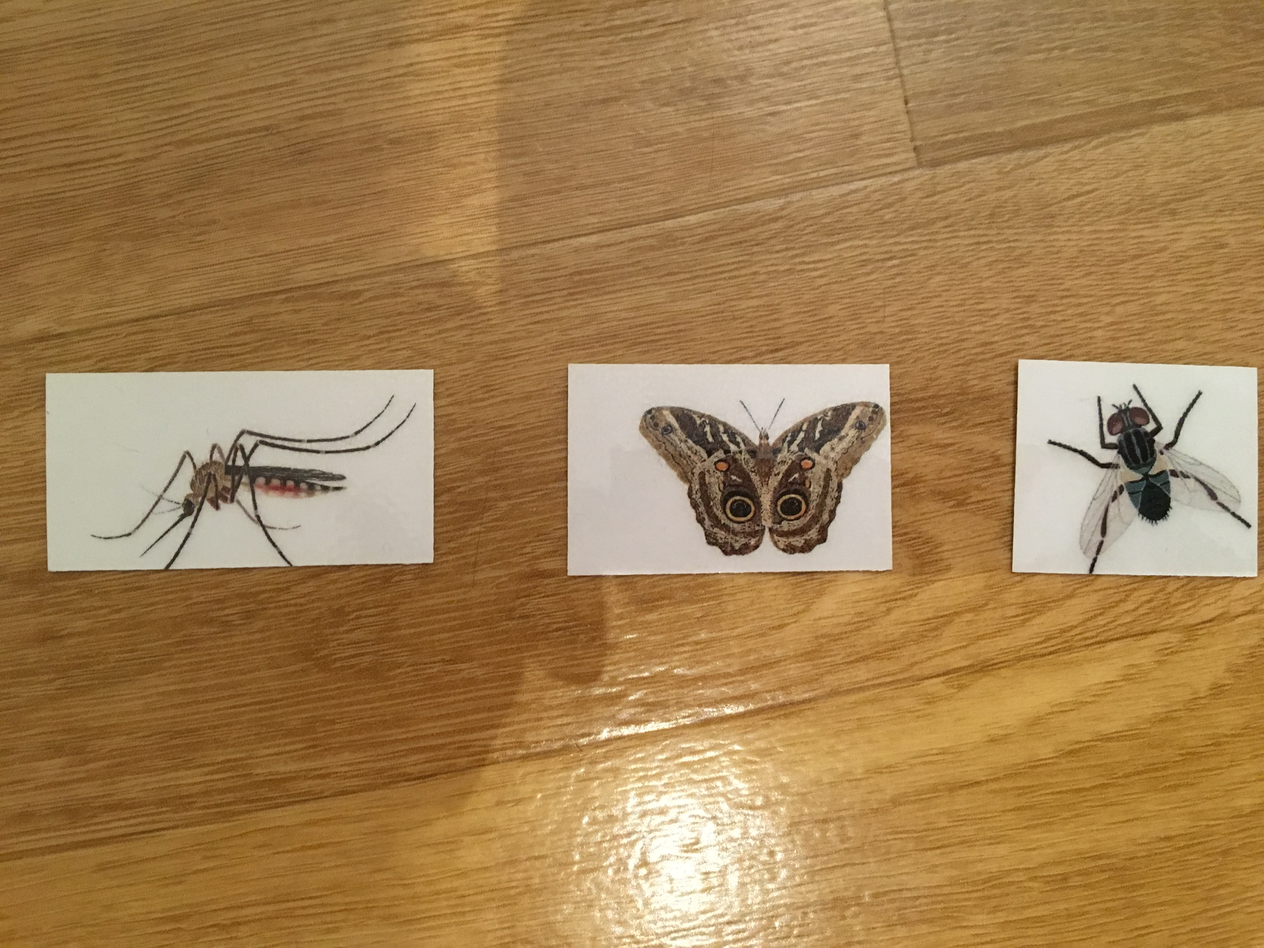 """""""Catch a bug"""" game : mosquito, moth and fly"""